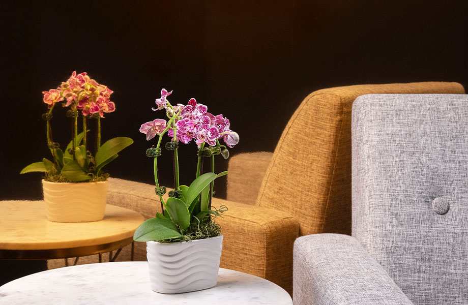 M9426 Polished Copper metal laminate walls in lobby with chair and flower