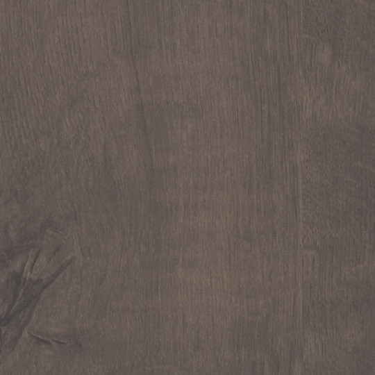 Quercus Marron