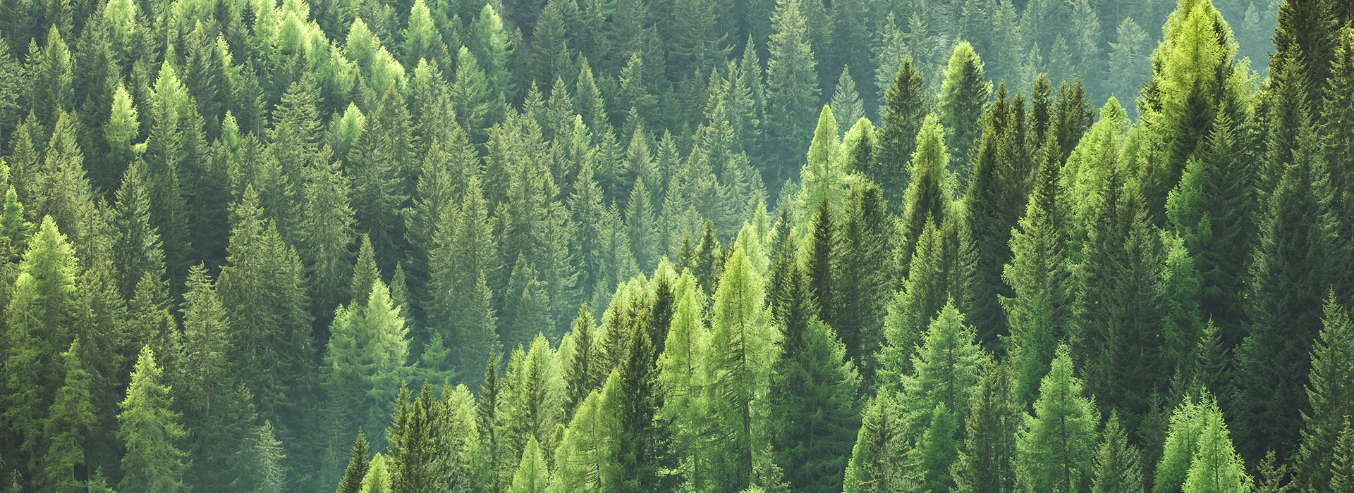 Formica Group Sustainability trees 1920x700