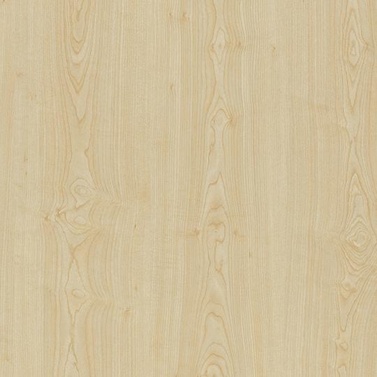 Sand Maple